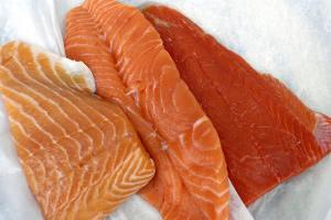 salmão de cativeiro