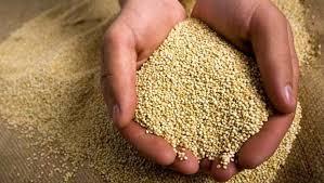 A quinoa é uma semente, originária dos Andes, que é de baixo teor calórico e muito nutritiva
