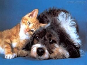 Os gatos e os cachorros podem conviver muito bem? Mas, você teria um gato ou um cachorro?