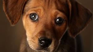 Os cachorros são capazes de tudo pelo dono!